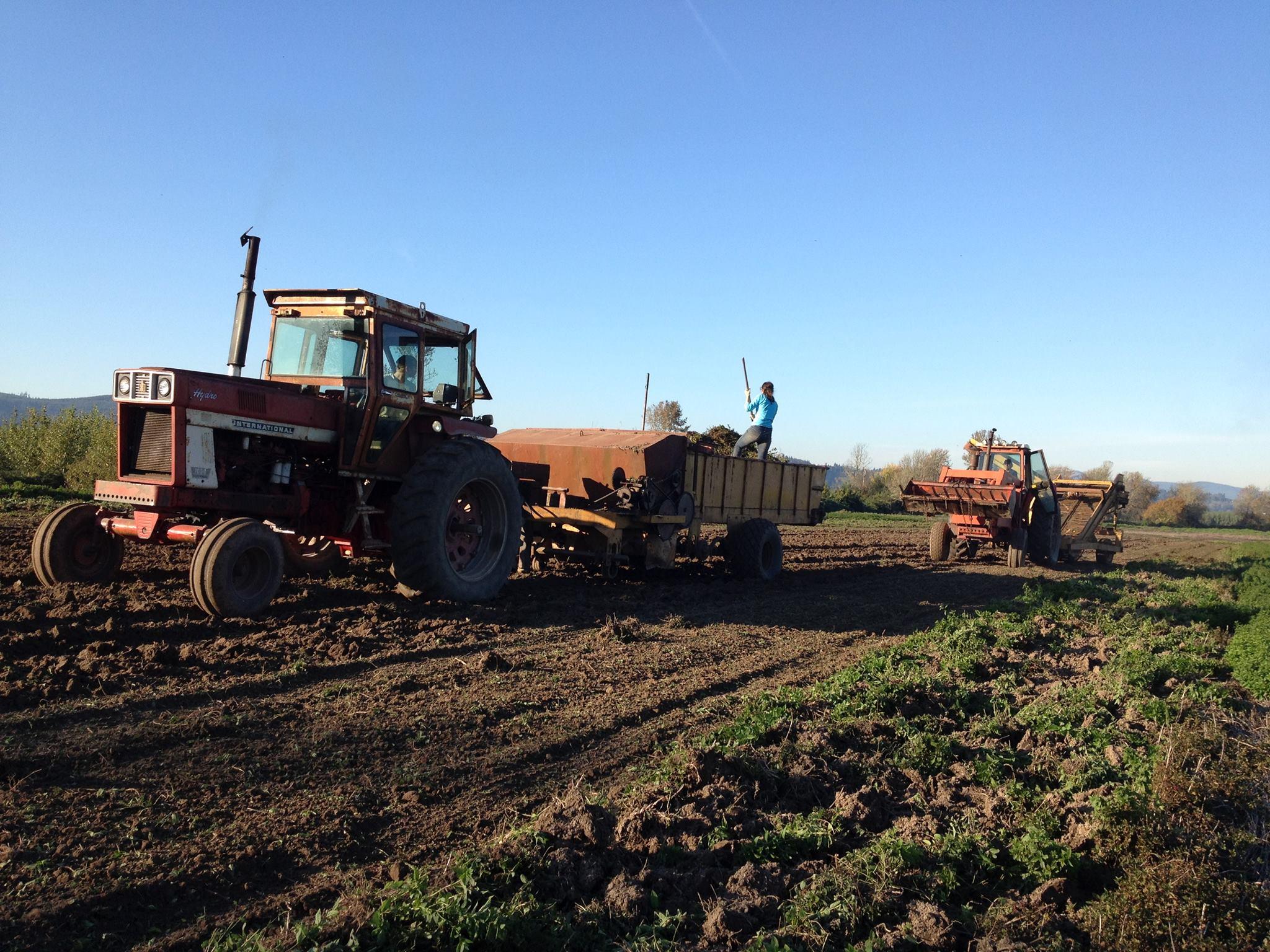 Teamwork at Seely Mint's Farm