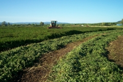 Seely Family Farm Harvest