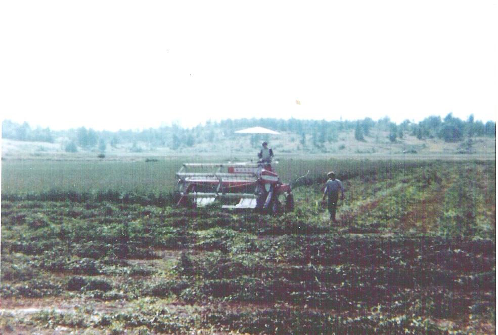 Mint Harvest