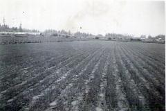 First Mint Field